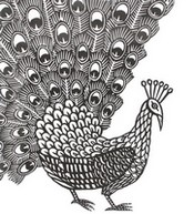 Adult coloring page Peacock