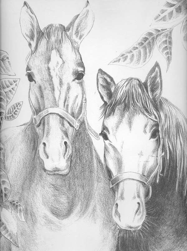 ausmalen als antistress pferde  pferde 3
