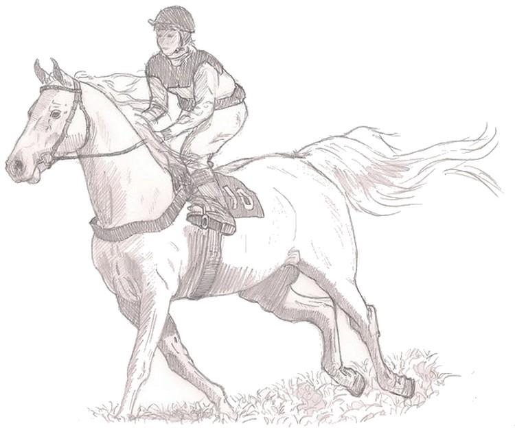 Famoso Disegno da colorare Cavalli : Cavallerizzo 7 CT73