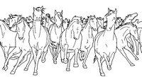 Coloriage anti-stress Chevaux sauvages