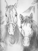 Coloriage adulte Chevaux