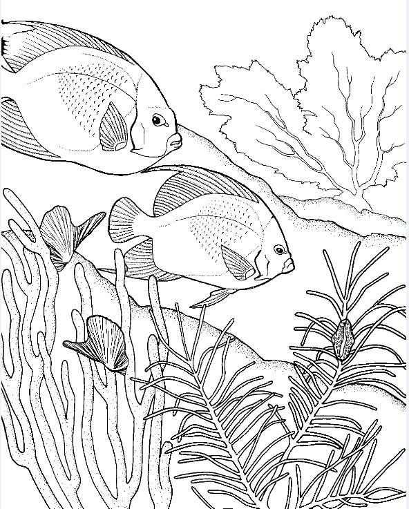 Dibujos para colorear para adultos Peces 12
