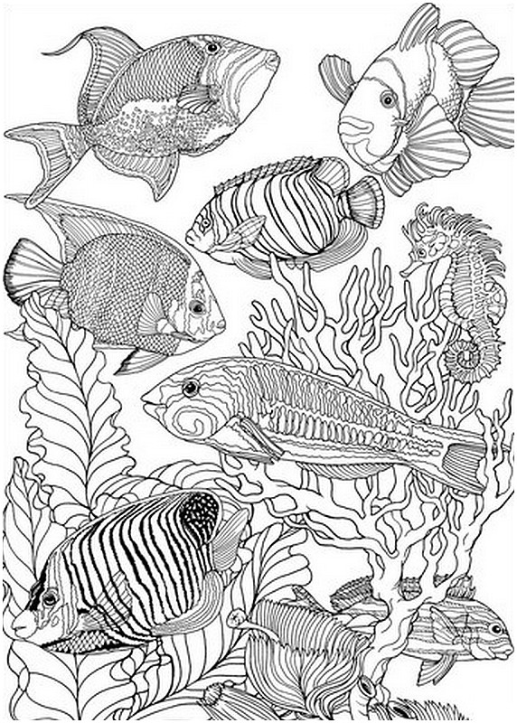 adult fish coloring pages 1000 images about icolor underwater on pinterest