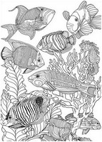 Malvorlagen Für Erwachsene Fische