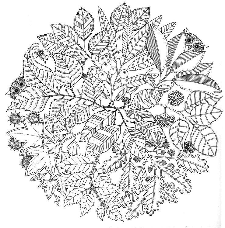 leaf coloring pages for adults - photo#29