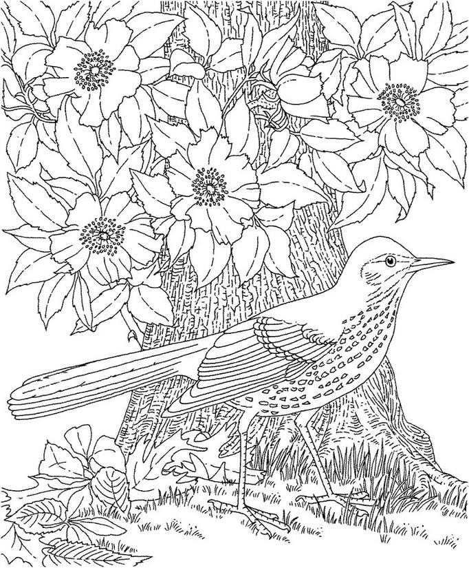 Coloriage anti-stress Ete : Oiseau 4
