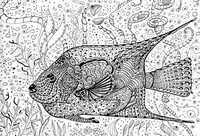 Coloriage anti-stress Poisson