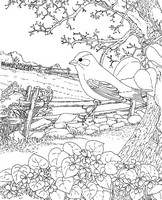 Coloriage anti-stress Hirondelle au printemps