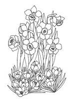 Coloriage anti-stress Jonquilles