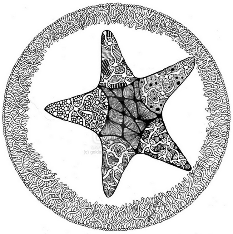 Adult Coloring Page Sea Starfish 10